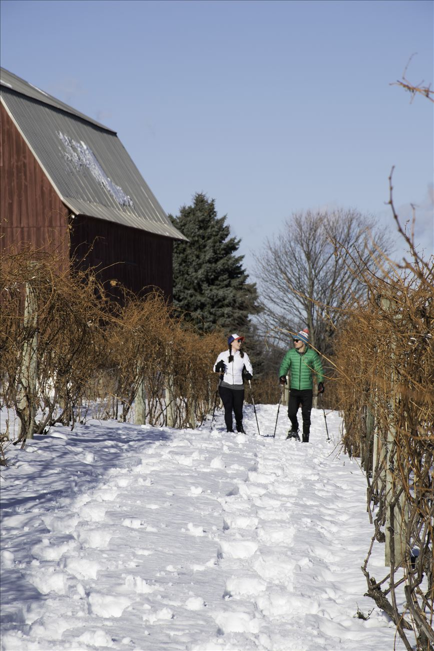Vine to Wine Snowshoe Tour with Grand Traverse Bike Tours